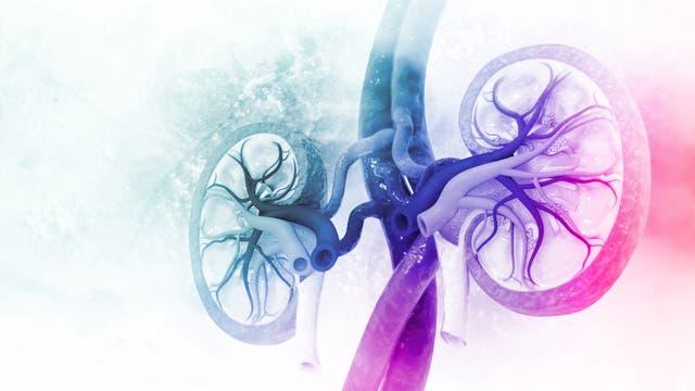 Schematische Darstellung der Nieren