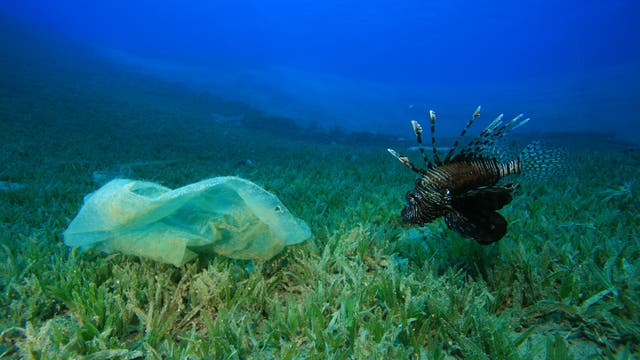 Feuerfisch inspiziert Plastiktüte im Meer (Symbolbild)