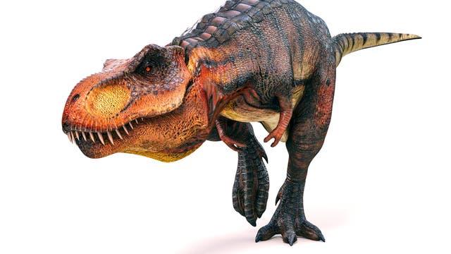 Rekonstruktion des Dinosauriers