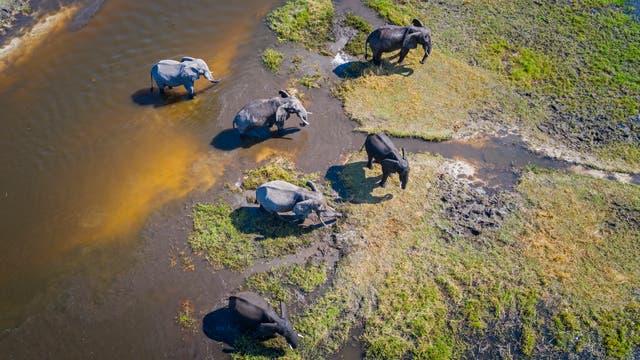 Elefanten im Moremi-Naturpark im Okavango-Delta
