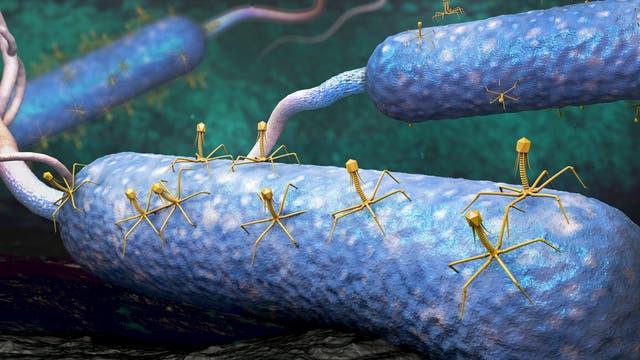 Phagen attackieren Bakterienzellen