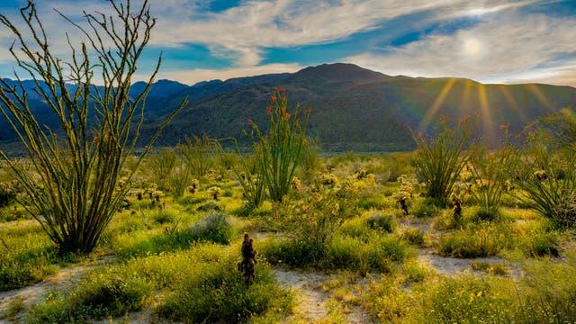 Arten- und pflanzenreiche Sonora-Wüste im Anza-Borrega-Schutzgebiet