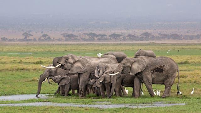 Elefanten im Amboseli-Nationalpark