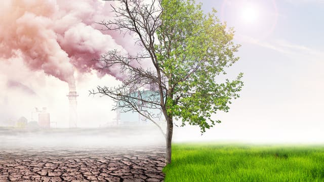 Grüner Baum und toter Baum
