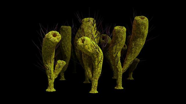 Künstlerische Darstellung von Schwämmen der Gattung Pirania aus dem Burgess-Schiefer. Diese Fossilien sind über 500 Millionen Jahre alt - und fast 400 Millionen Jahre jünger als die ältesten mutmaßlichen Schwammfossilien.
