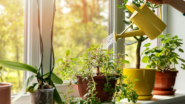 Pflanzen gießen