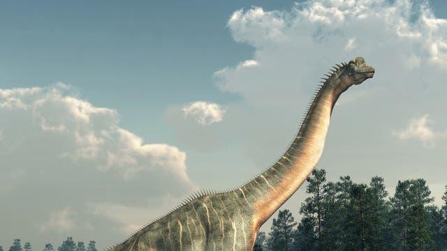 Ein rekonstruierter Sauropode