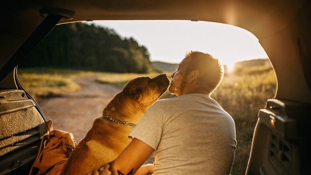 Mann und Hund auf Roadtrip