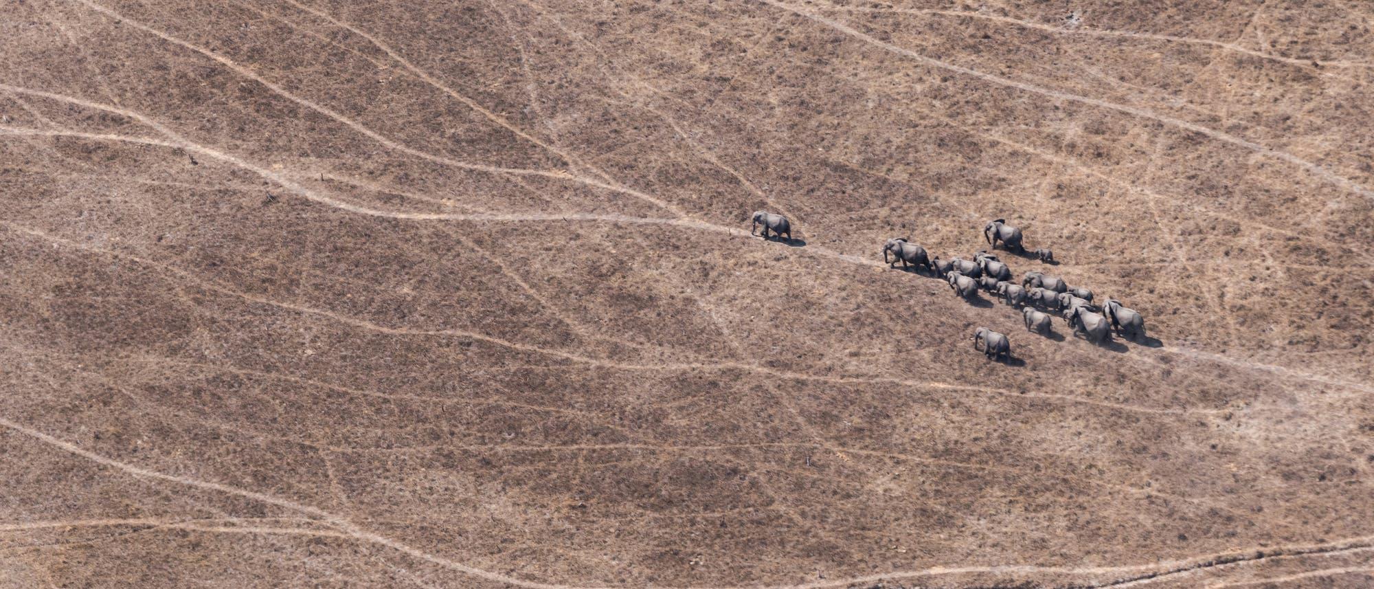 17 Elefanten, aber aus der Luft, nicht aus dem All, fotografiert