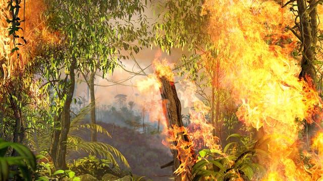 Brennender Regenwald im Amazonasgebiet.