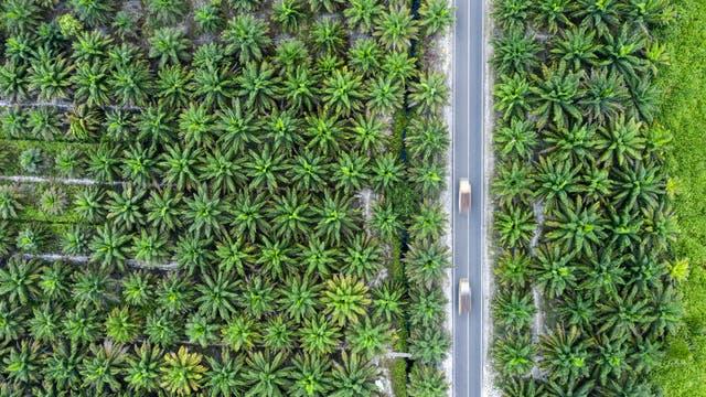 Palmölplantage in Indonesien