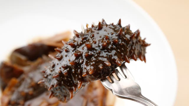 Seegurke kommt in vielen asiatischen Ländern auf den Tisch