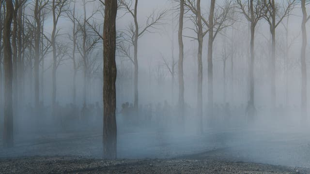 Zombies wandern durch neblige Waldlandschaft
