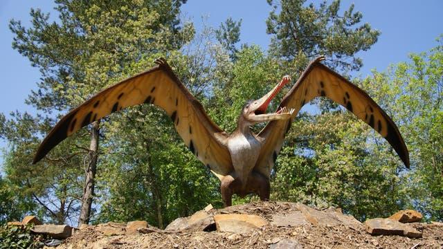 Junger Pterosaurier