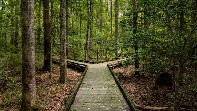 Zwei Wege im Wald