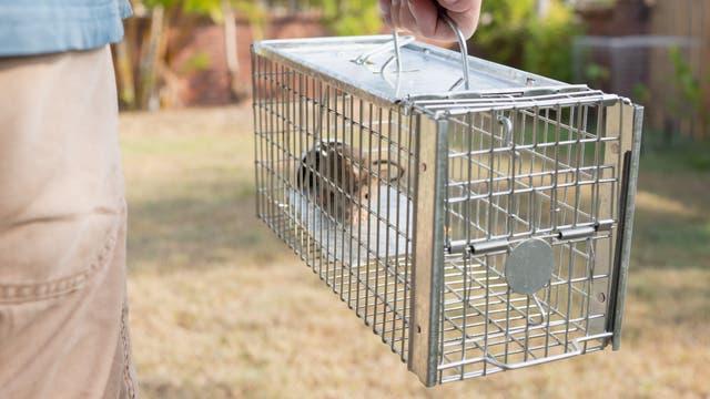 Maus im Käfig