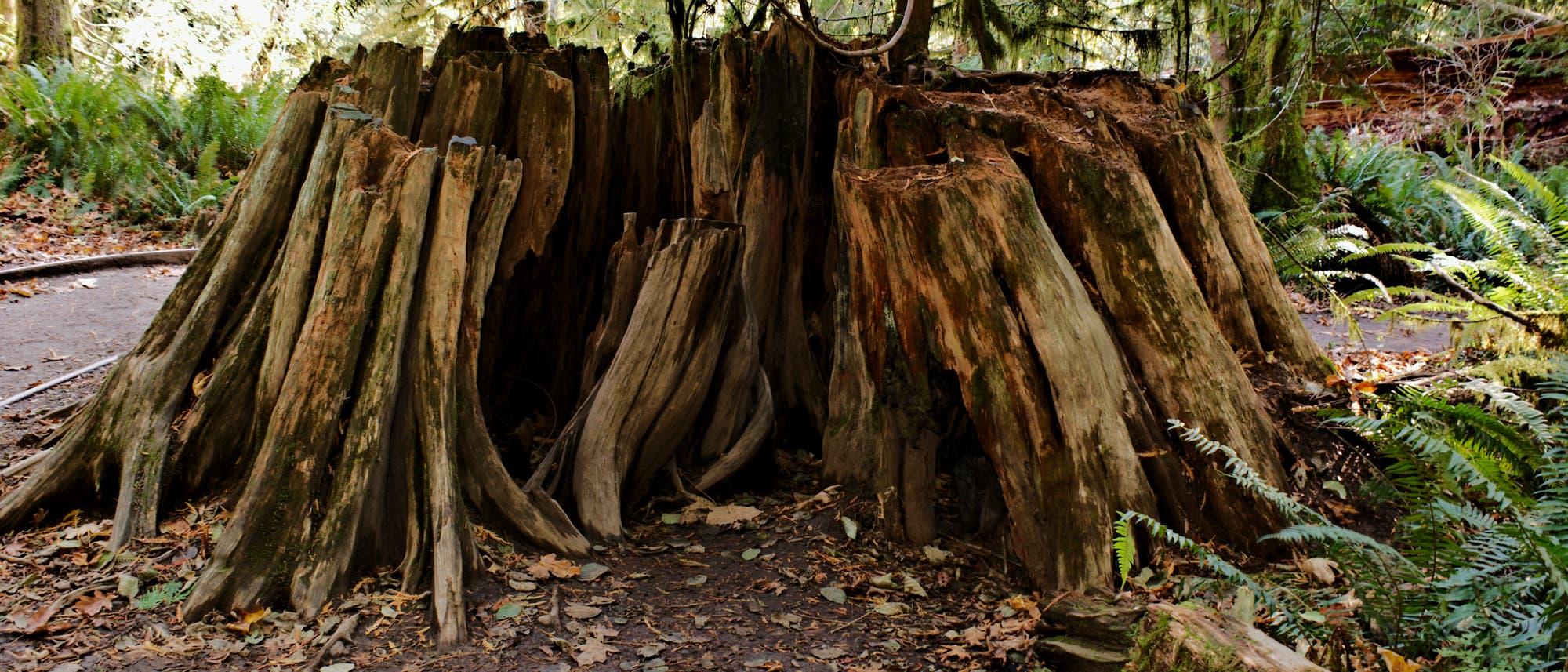 Ein Baumstumpf im Wald