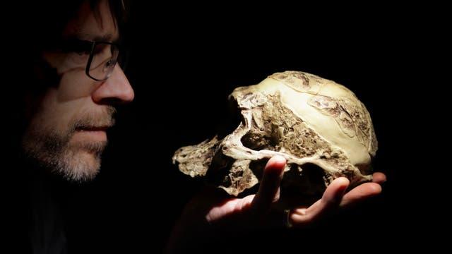 Homo sapiens hält Modell eines Australopithecus-africanus-Schädels