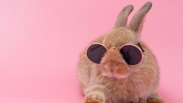 Ein Kaninchen mit Sonnenbrille vor rosafarbenem Hintergrund. Bin nicht sicher, ob es eher niedlich oder verstörend ist.