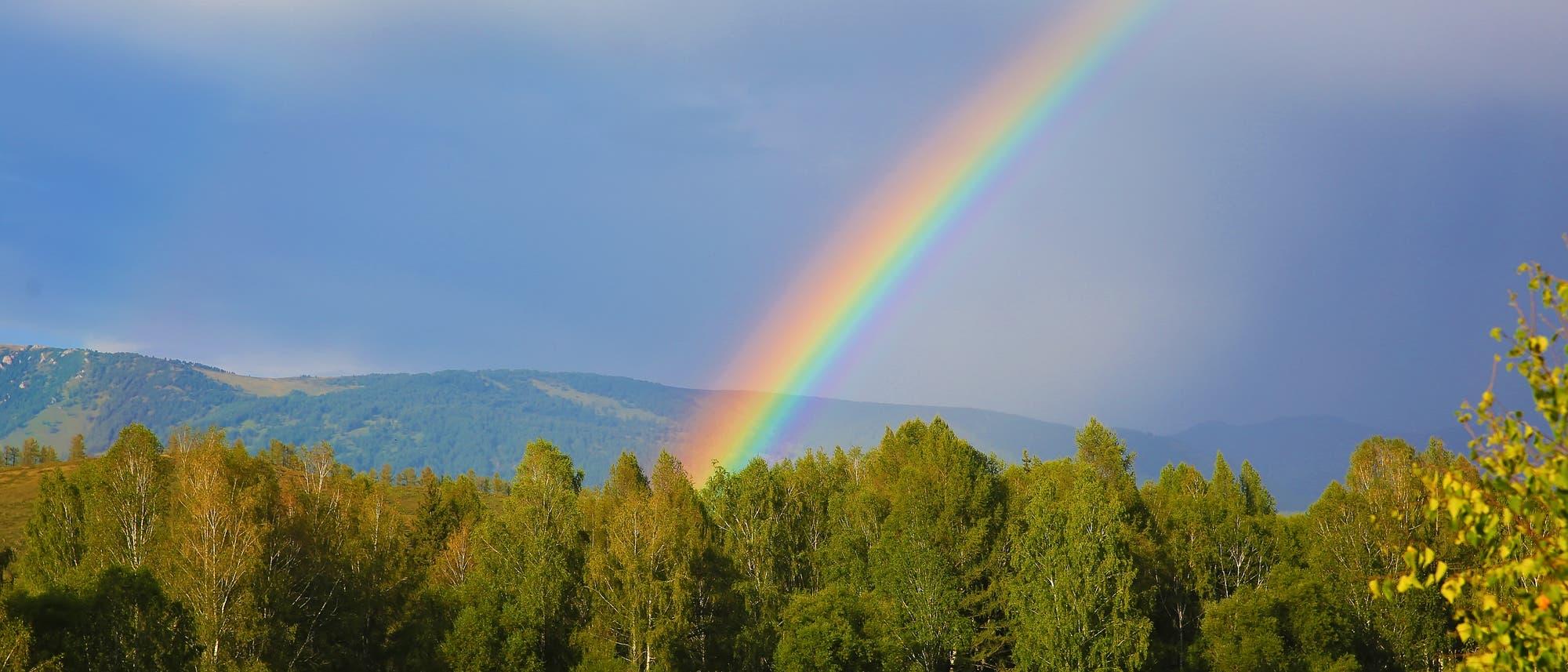 Regenbogen über einem Wald, im Hintergrund Berge. Ja, das Bild ist total cheesy. Lasst mich doch auch mal.