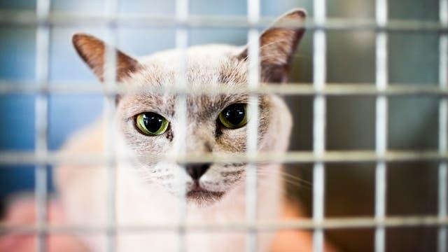 Katze im Käfig in Quarantäne