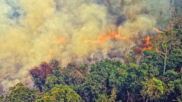 Luftaufnahme eines stark rauchenden Feuers, das sich auf einer entwaldeten Fläche in den Regenwald frisst.
