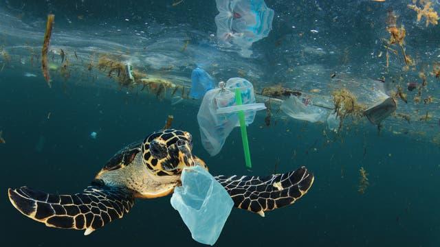Manche Tiere verheddern sich im Plastikmüll, andere Lebewesen haben Vergiftungen.