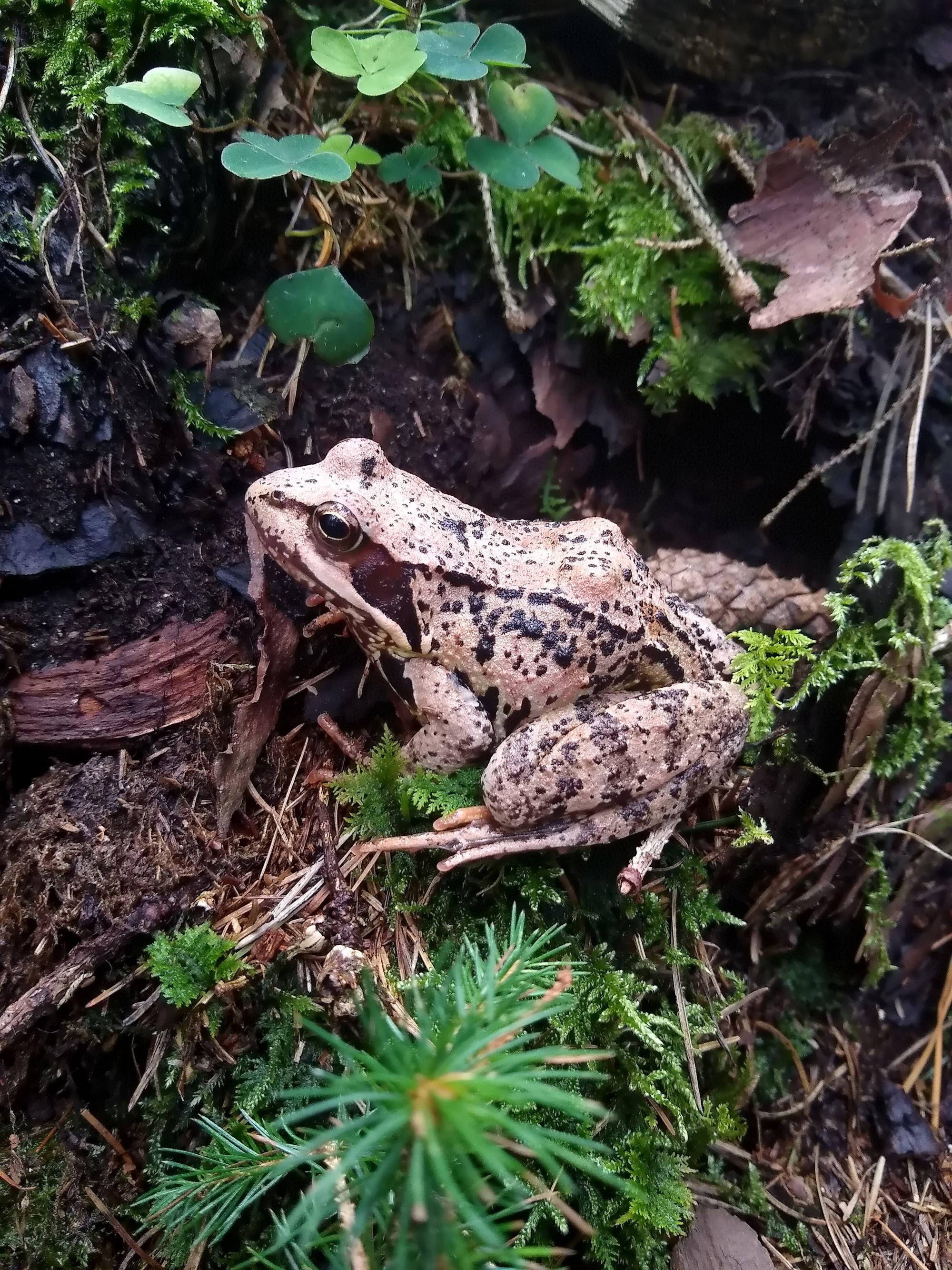 Amphibien könnten das sechste Massenaussterben überleben.