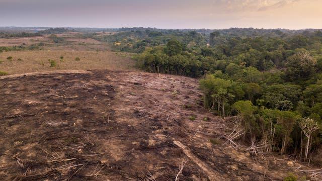Gerodete Fläche mit scharfer Grenze zum (noch) intakten Wald
