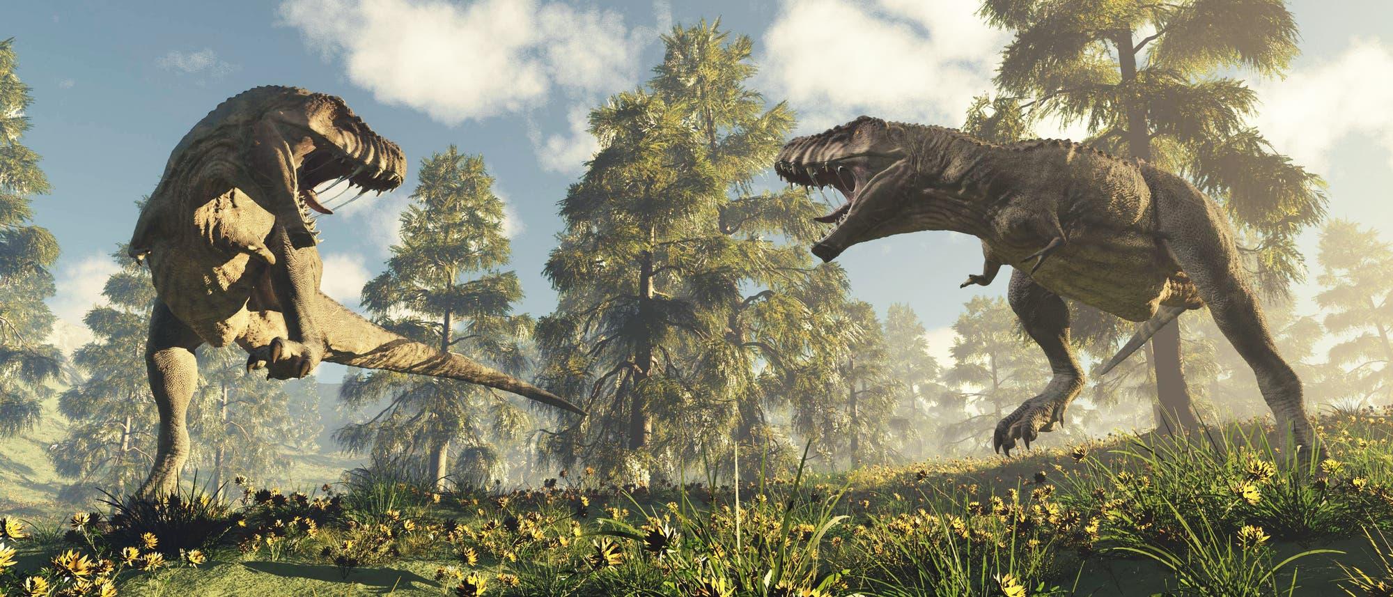 Zwei Tyrannosaurier beim Kämpfen.