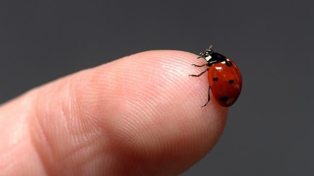 Marienkäfer sitzt auf einem Finger