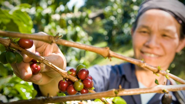 Kaffee-Farmerin