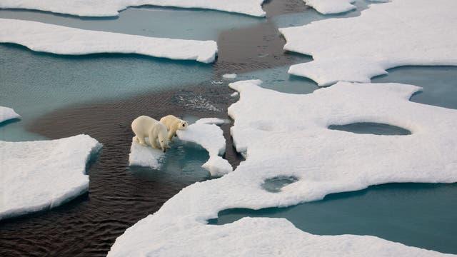 Zwei Eisbären auf einer Scholle im Meer