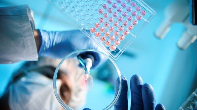 Um neue Medikamente zu entwickeln, sind viele Labortests notwendig