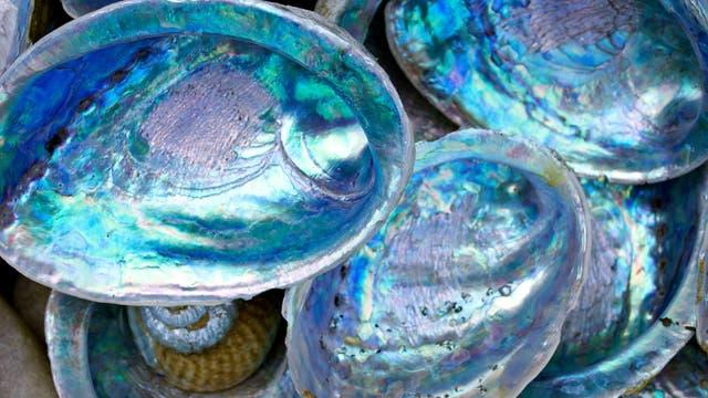 Bei Seeohren findet man eine ausgeprägte Perlmuttschicht