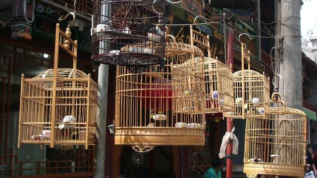 Vogelkäfige auf chinesischem Tiermarkt