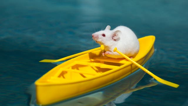 Maus im Ruderboot
