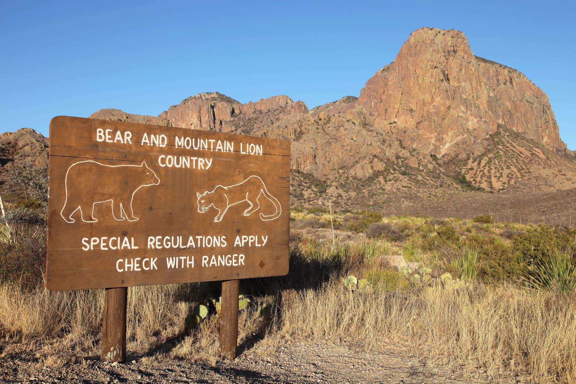 Vorsicht vor Bär und Puma