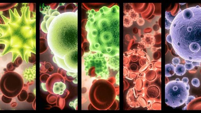 Mikroskopiebilder verschiedener Mikroorganismen