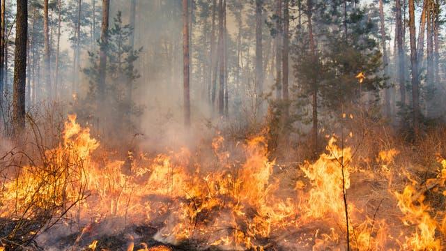 Waldbrand im Anfangsstadium (Symbolbild)