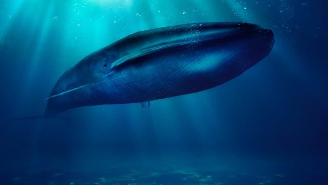 Wal unter Wasser