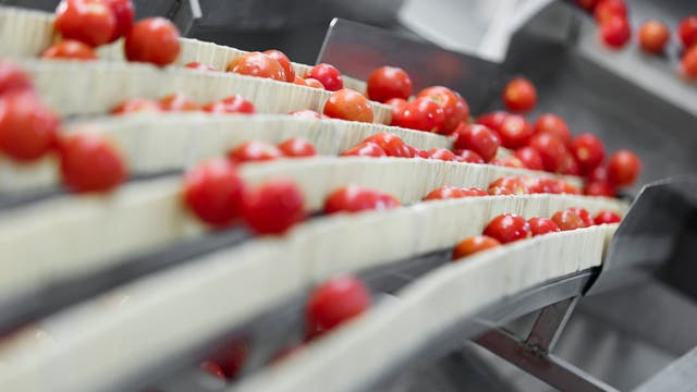 Lebensmittelsortiermaschine
