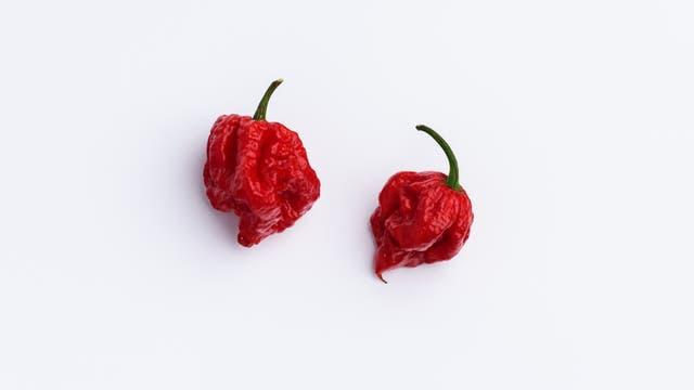 Chilis der Sorte »Carolina Reaper«