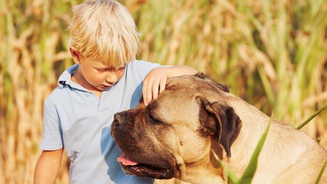 Kleiner Junge streichelt großen Hund