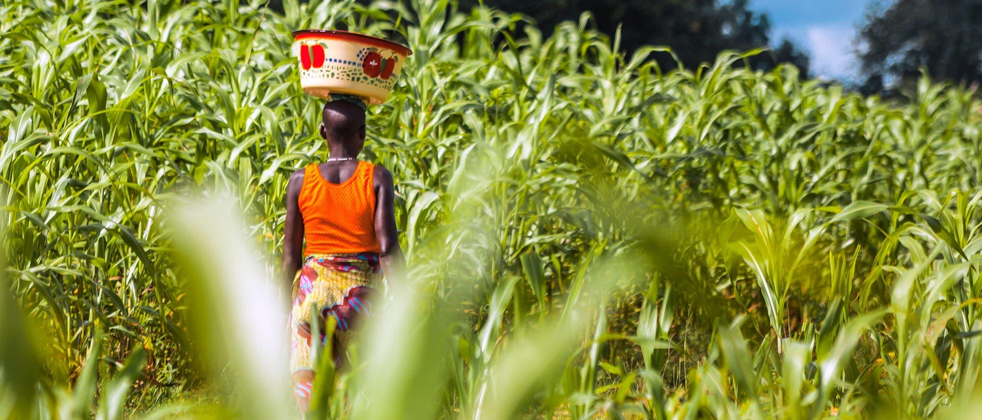Frau in einem Maisfeld in Benin
