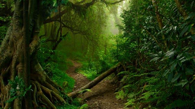 Regenwald-Dschungel in Nordthailand