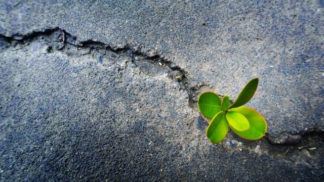 Pflanzenwachstum unter widrigen Bedingungen