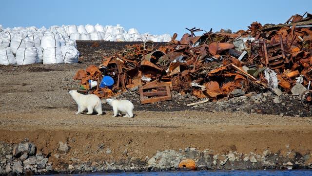 Eisbären vor Schrott (Symbolbild)