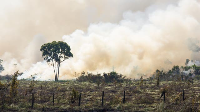 Fast ein Viertel des Regenwaldes im brasilianischen Amazonas-Gebiet auf öffentlichem Grund, befindet sich illegal in Privatbesitz.