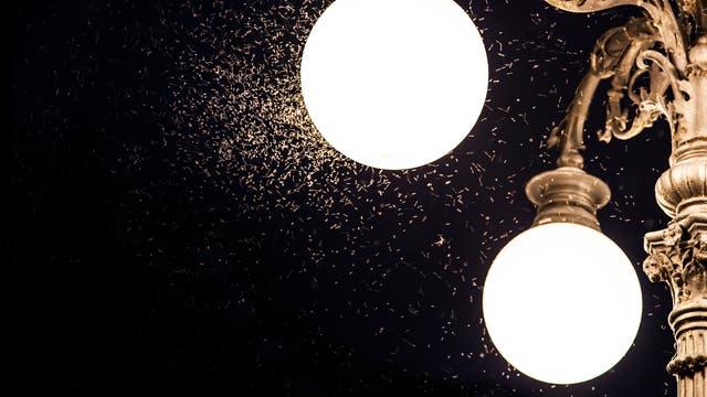 Insektenumschwirrte Beleuchtung